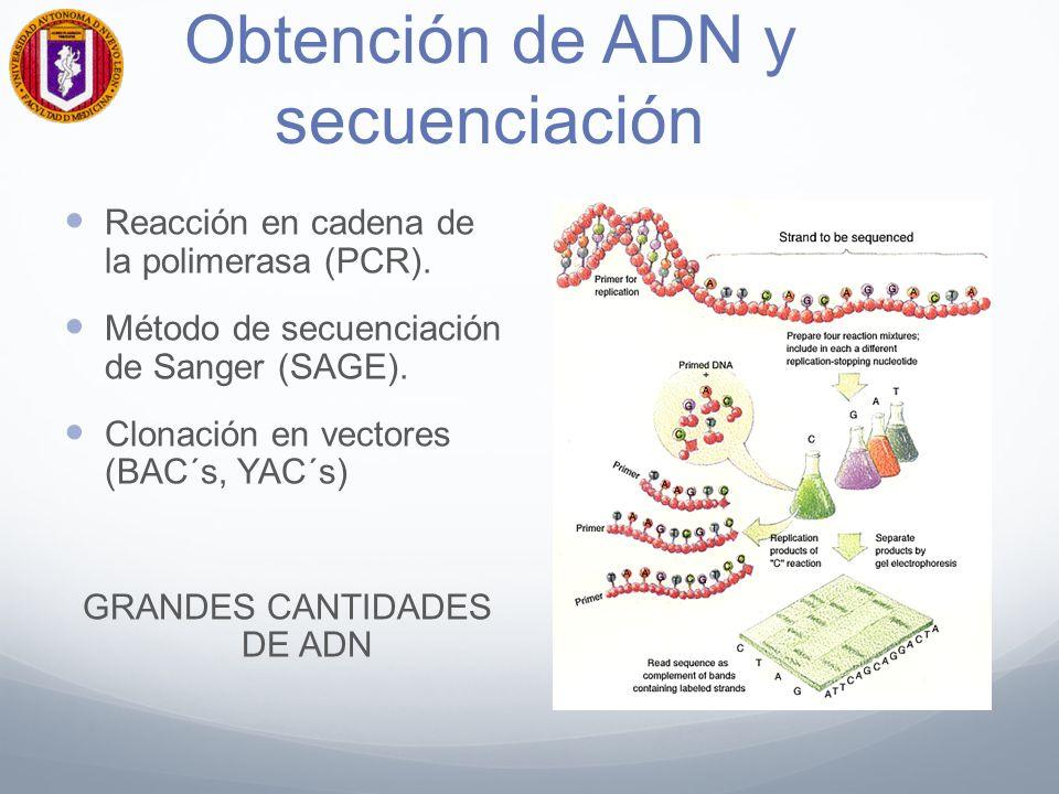 Obtención de ADN y secuenciación Reacción en cadena de la polimerasa (PCR).