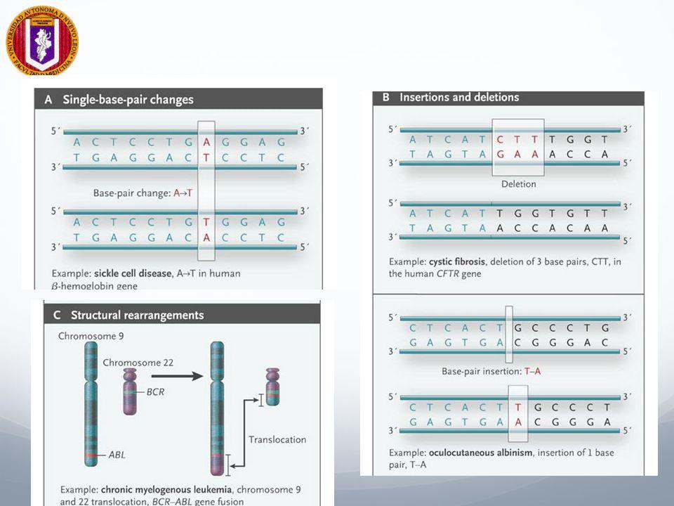 Patogénesis de mutaciones Las Ins/Dels y los SNPs pueden conferir riesgo o protección contra enfermedades Re-arreglos estructurales se asocian a estados patológicos.
