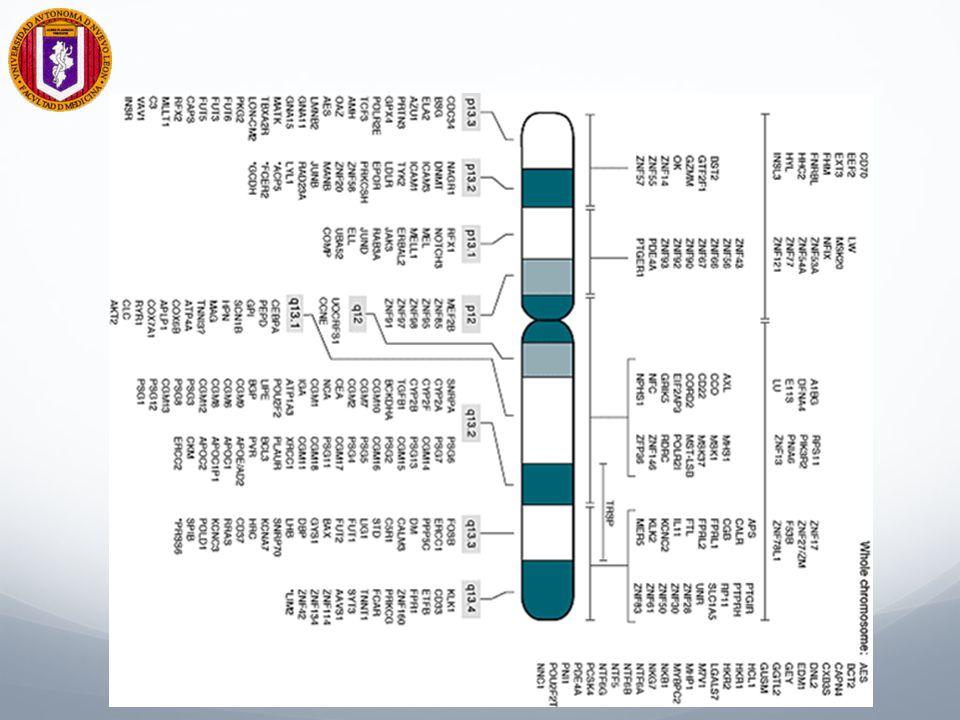 Ramas de la Biología Beneficiarias del Conocimiento del Genoma Humano Medicina Bioinformática Biotecnología