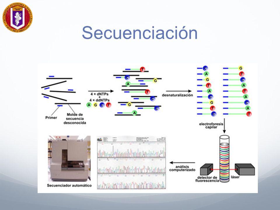 Proteómica Investiga los patrones y niveles de expresión génica en células enfermas las cuales pueden analizarse para construir bases de datos de los perfiles de expresión.