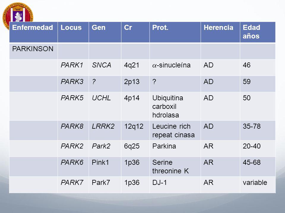 EnfermedadLocusGenCrProt.HerenciaEdad años PARKINSON PARK1SNCA4q21 -sinucleína AD46 PARK3?2p13?AD59 PARK5UCHL4p14Ubiquitina carboxil hdrolasa AD50 PARK8LRRK212q12Leucine rich repeat cinasa AD35-78 PARK2Park26q25ParkinaAR20-40 PARK6Pink11p36Serine threonine K AR45-68 PARK7Park71p36DJ-1ARvariable