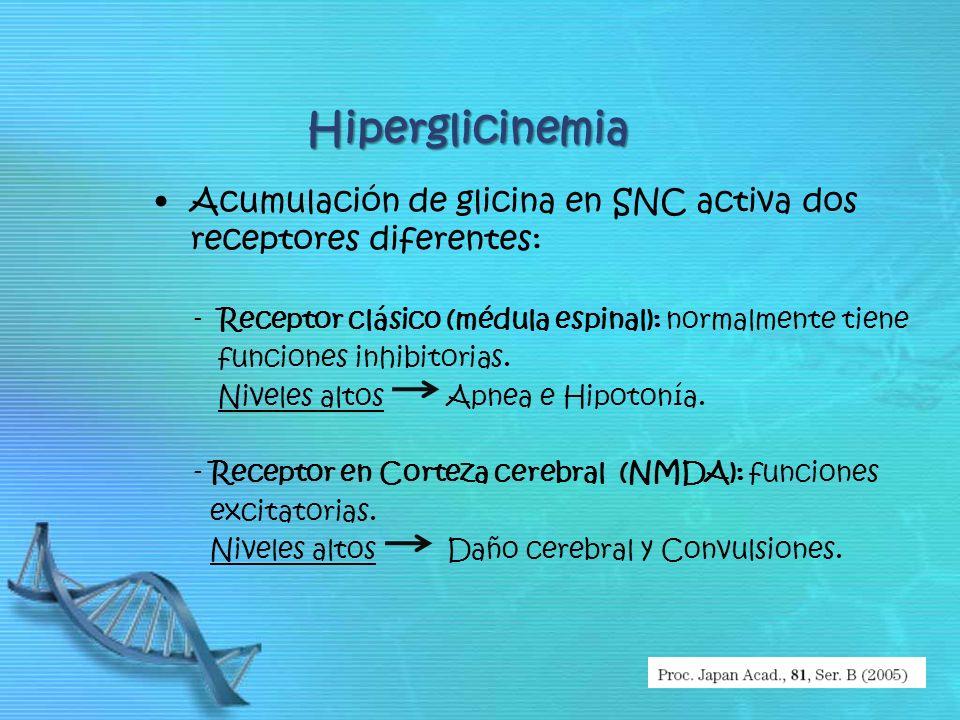 Hiperglicinemia Acumulación de glicina en SNC activa dos receptores diferentes: - Receptor clásico (médula espinal): normalmente tiene funciones inhib