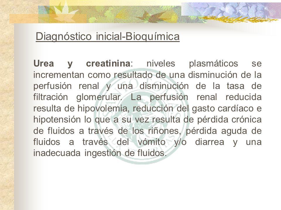 Urea y creatinina: niveles plasmáticos se incrementan como resultado de una disminución de la perfusión renal y una disminución de la tasa de filtraci