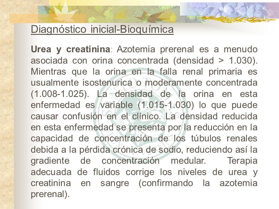 Urea y creatinina : Azotemia prerenal es a menudo asociada con orina concentrada (densidad > 1.030). Mientras que la orina en la falla renal primaria