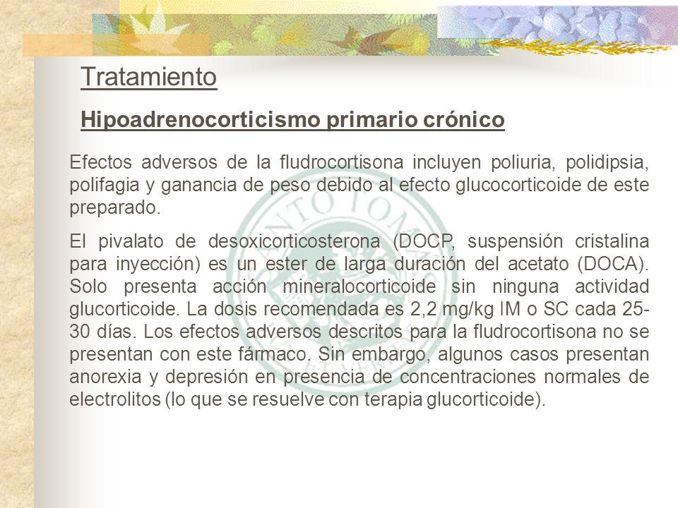 Tratamiento Hipoadrenocorticismo primario crónico Efectos adversos de la fludrocortisona incluyen poliuria, polidipsia, polifagia y ganancia de peso d