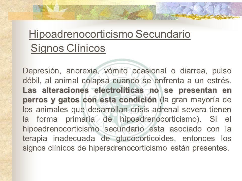 Las alteraciones electrolíticas no se presentan en perros y gatos con esta condición Depresión, anorexia, vómito ocasional o diarrea, pulso débil, al