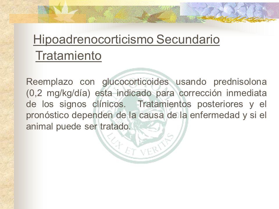 Reemplazo con glucocorticoides usando prednisolona (0,2 mg/kg/día) esta indicado para corrección inmediata de los signos clínicos. Tratamientos poster