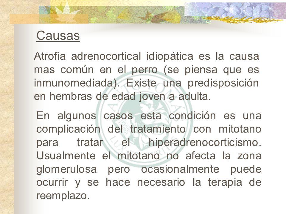Urea y creatinina : Azotemia prerenal es a menudo asociada con orina concentrada (densidad > 1.030).