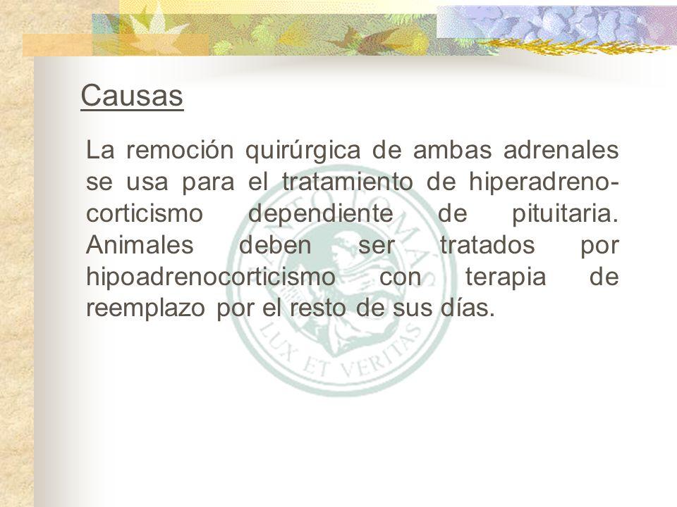 Factores condicionantes Raza Todas las razas se pueden ver afectadas con esta condición pero el Gran Danés, Rottweilers, Poodles y algunos Terriers parecen presentar un mayor riesgo de desarrollar hipoadrenocorticismo.