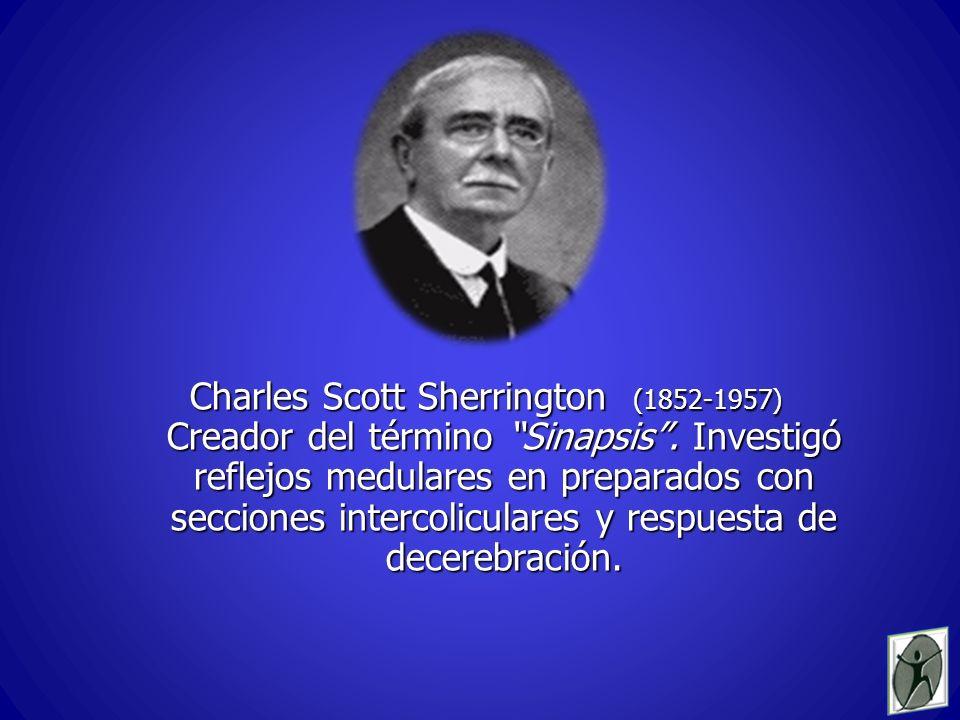 Charles Scott Sherrington (1852-1957) Creador del término Sinapsis.