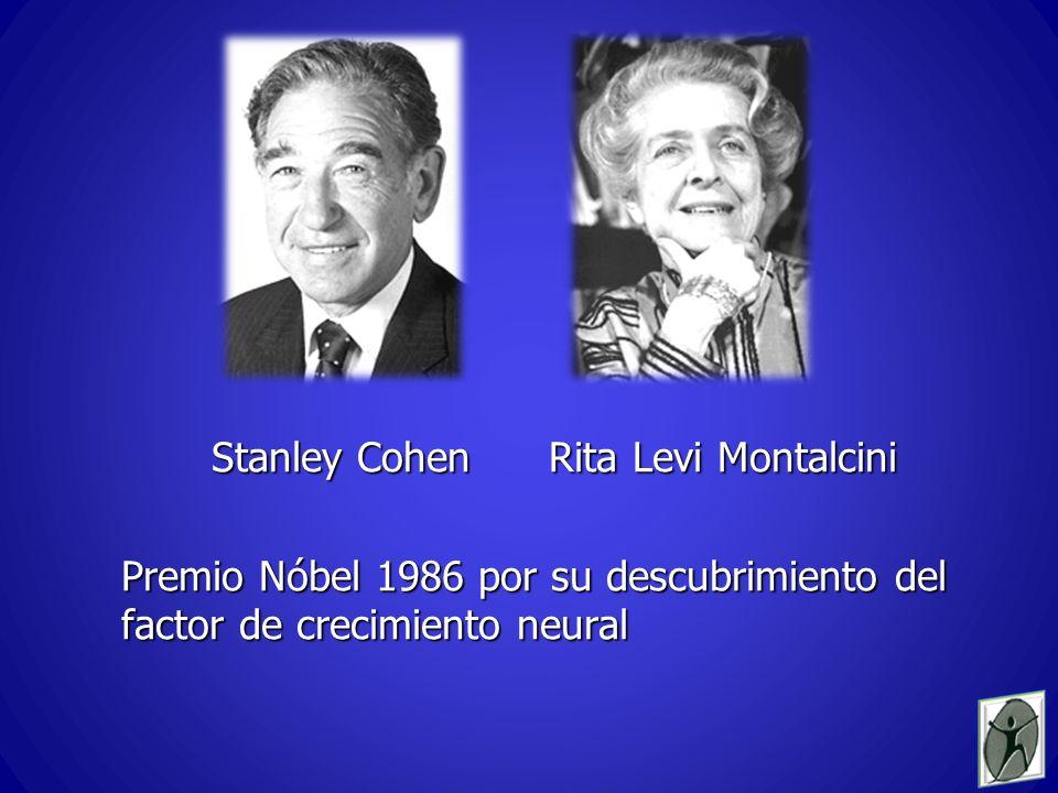 Stanley Cohen Rita Levi Montalcini Stanley Cohen Rita Levi Montalcini Premio Nóbel 1986 por su descubrimiento del factor de crecimiento neural