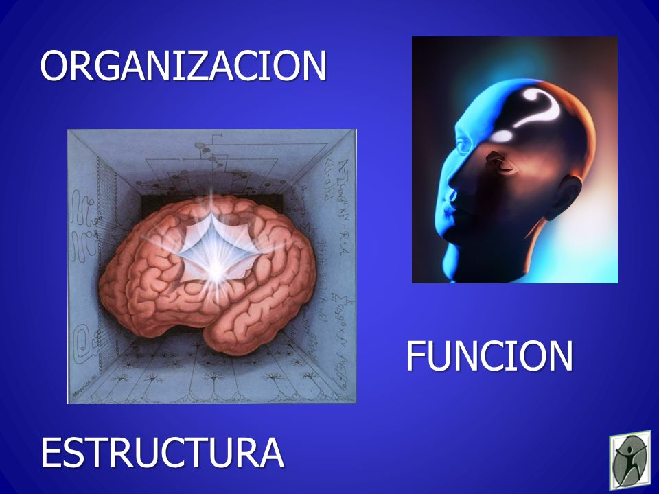 La neuropsicología pretende interrelacionar los conocimientos de la psicología cognitiva con las neurociencias, develar la fisiopatología del trastorno y, sobre esta base, encarar racionalmente la estrategia de tratamiento JULIO CASTAÑO