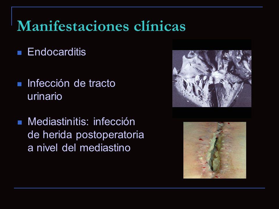 Manifestaciones clínicas Endocarditis Infección de tracto urinario Mediastinitis: infección de herida postoperatoria a nivel del mediastino