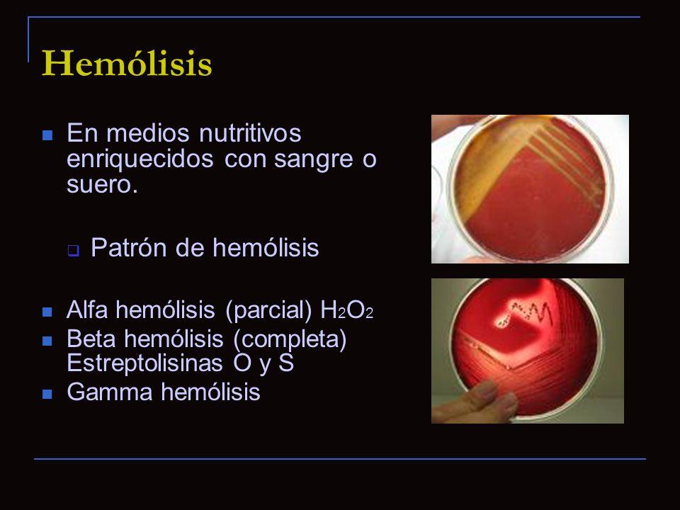 Hemólisis En medios nutritivos enriquecidos con sangre o suero. Patrón de hemólisis Alfa hemólisis (parcial) H 2 O 2 Beta hemólisis (completa) Estrept