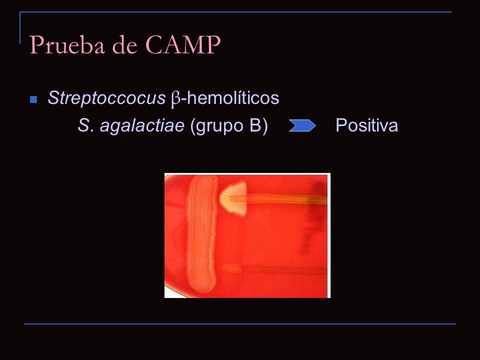 Prueba de CAMP Streptoccocus β -hemolíticos S. agalactiae (grupo B) Positiva