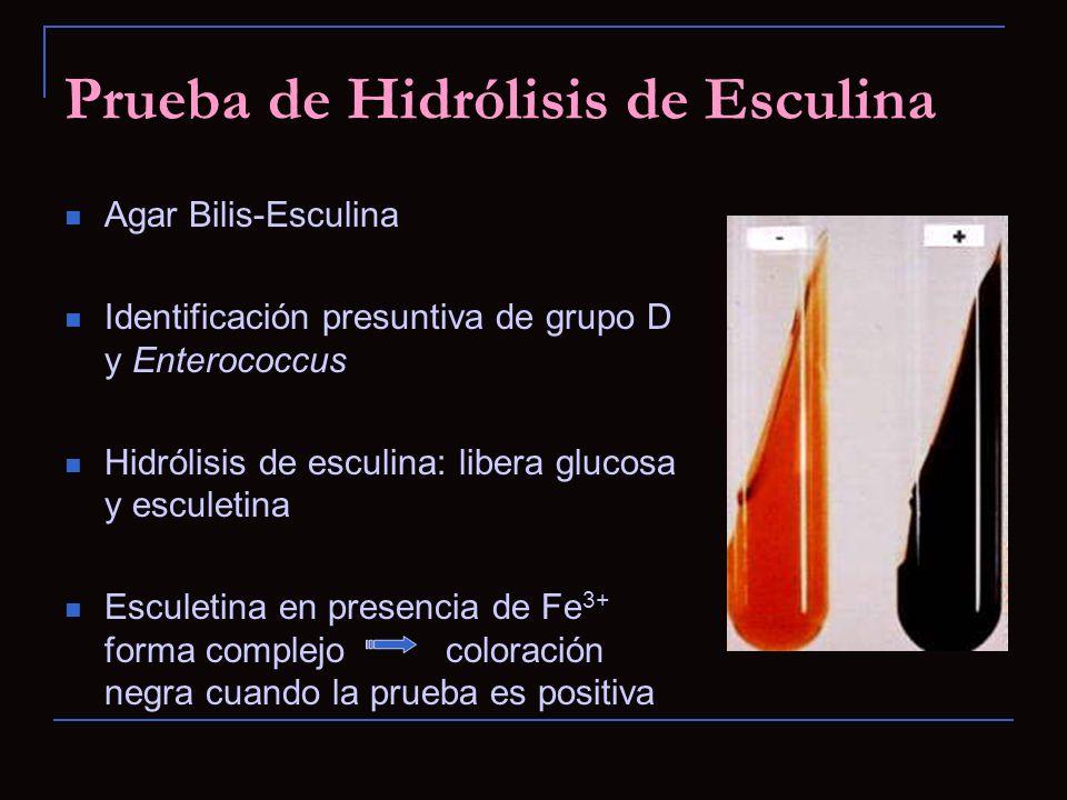 Prueba de Hidrólisis de Esculina Agar Bilis-Esculina Identificación presuntiva de grupo D y Enterococcus Hidrólisis de esculina: libera glucosa y escu