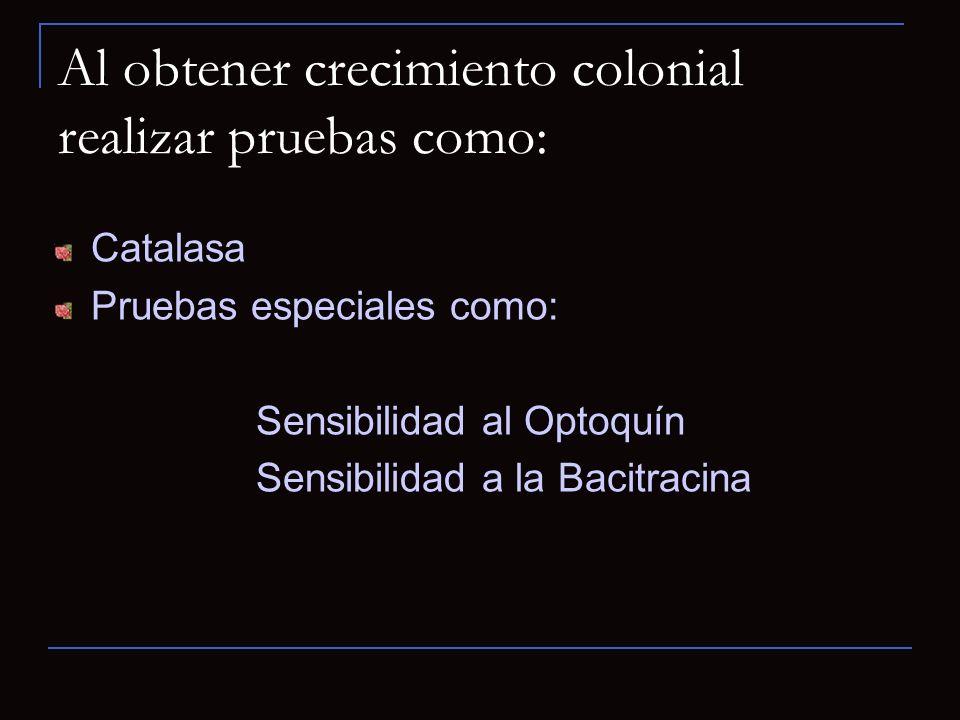Al obtener crecimiento colonial realizar pruebas como: Catalasa Pruebas especiales como: Sensibilidad al Optoquín Sensibilidad a la Bacitracina