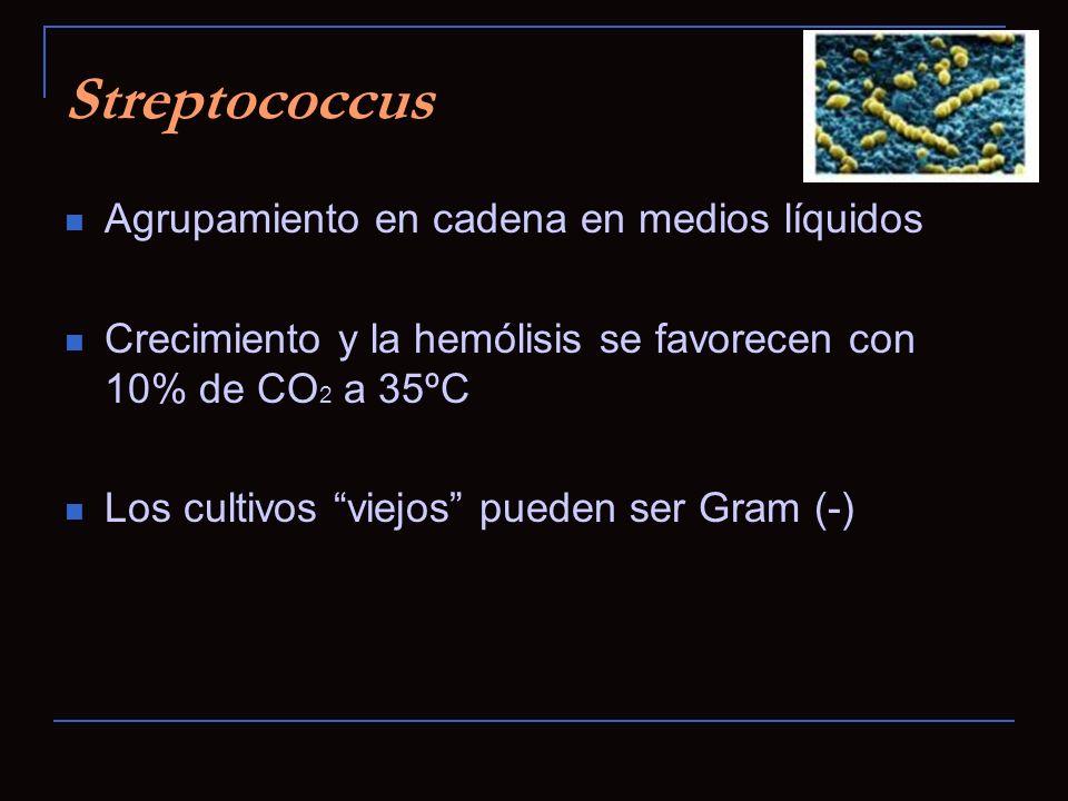 Streptococcus Agrupamiento en cadena en medios líquidos Crecimiento y la hemólisis se favorecen con 10% de CO 2 a 35ºC Los cultivos viejos pueden ser