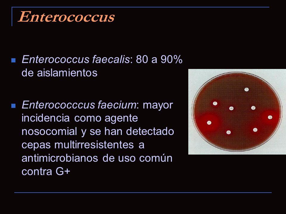 Enterococcus Enterococcus faecalis: 80 a 90% de aislamientos Enterococccus faecium: mayor incidencia como agente nosocomial y se han detectado cepas m