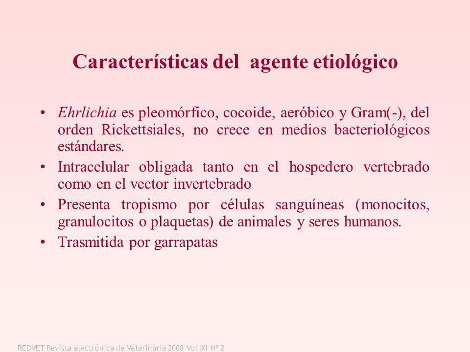 Características del agente etiológico Ehrlichia es pleomórfico, cocoide, aeróbico y Gram(-), del orden Rickettsiales, no crece en medios bacteriológic