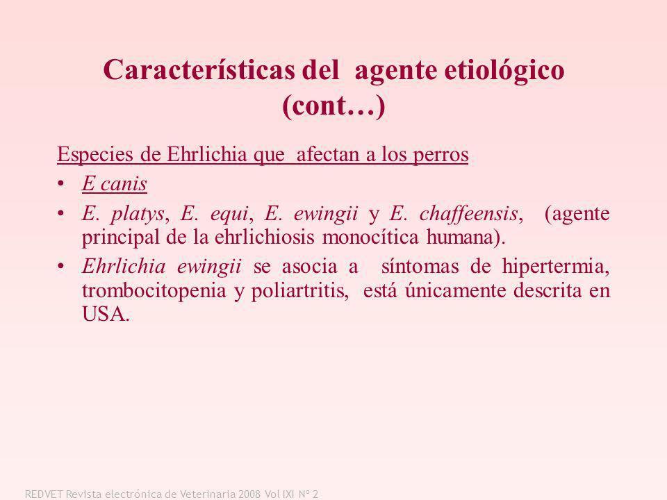 Características del agente etiológico (cont…) Especies de Ehrlichia que afectan a los perros E canis E. platys, E. equi, E. ewingii y E. chaffeensis,