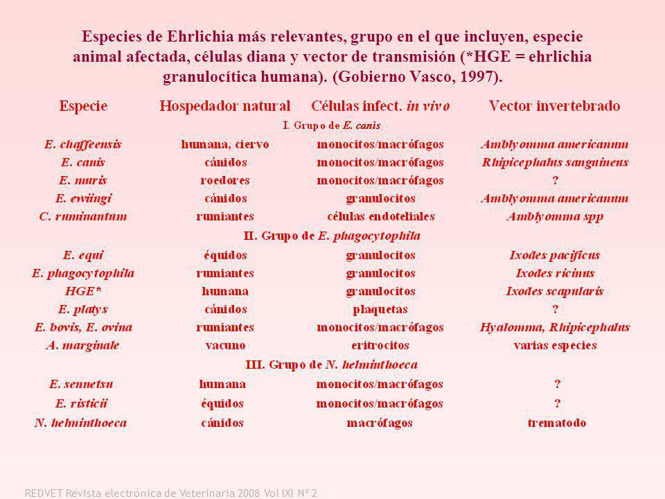 Especies de Ehrlichia más relevantes, grupo en el que incluyen, especie animal afectada, células diana y vector de transmisión (*HGE = ehrlichia granu