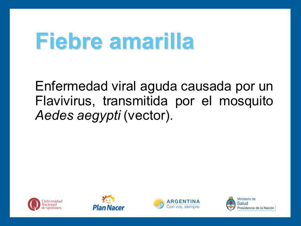 Enfermedad viral aguda causada por un Flavivirus, transmitida por el mosquito Aedes aegypti (vector).