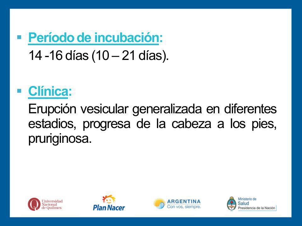 Período de incubación: 14 -16 días (10 – 21 días).