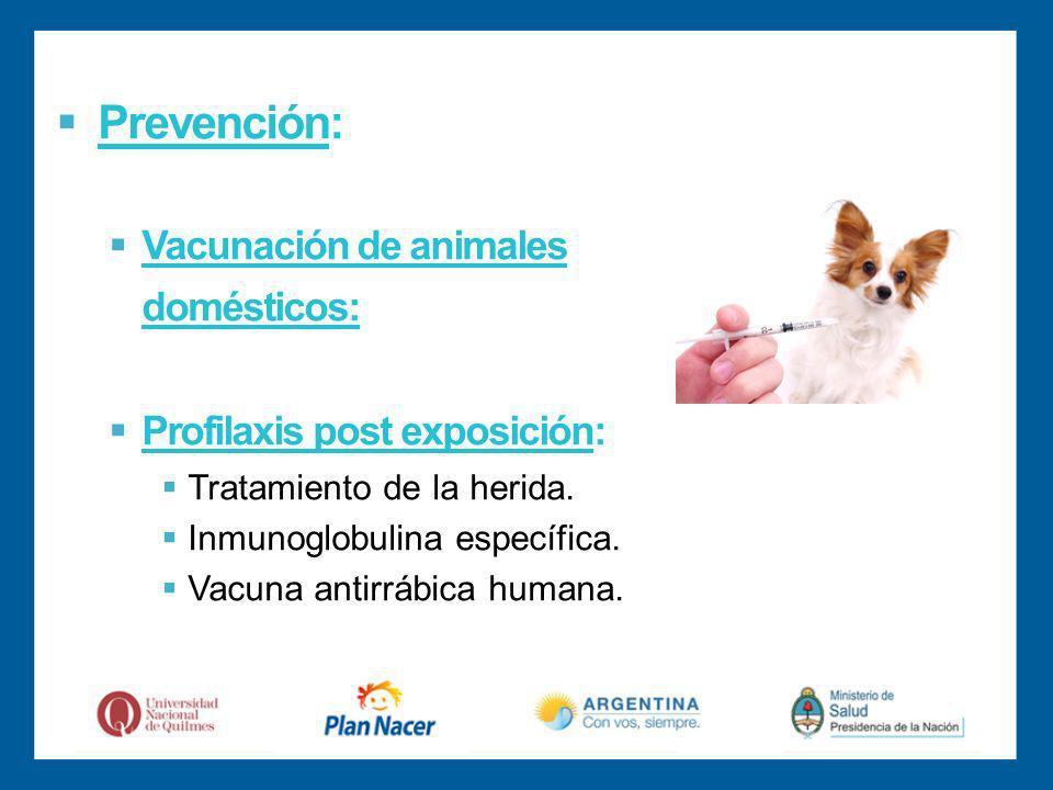 Prevención: Vacunación de animales domésticos: Profilaxis post exposición: Tratamiento de la herida.