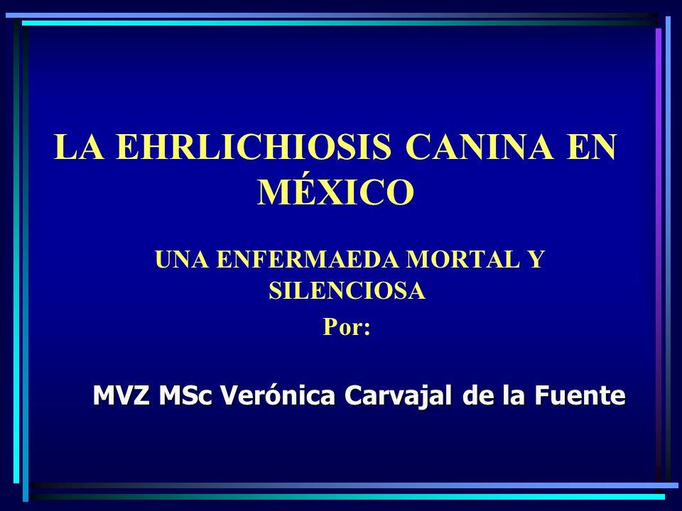 LA EHRLICHIOSIS CANINA EN MÉXICO UNA ENFERMAEDA MORTAL Y SILENCIOSA Por: MVZ MSc Verónica Carvajal de la Fuente