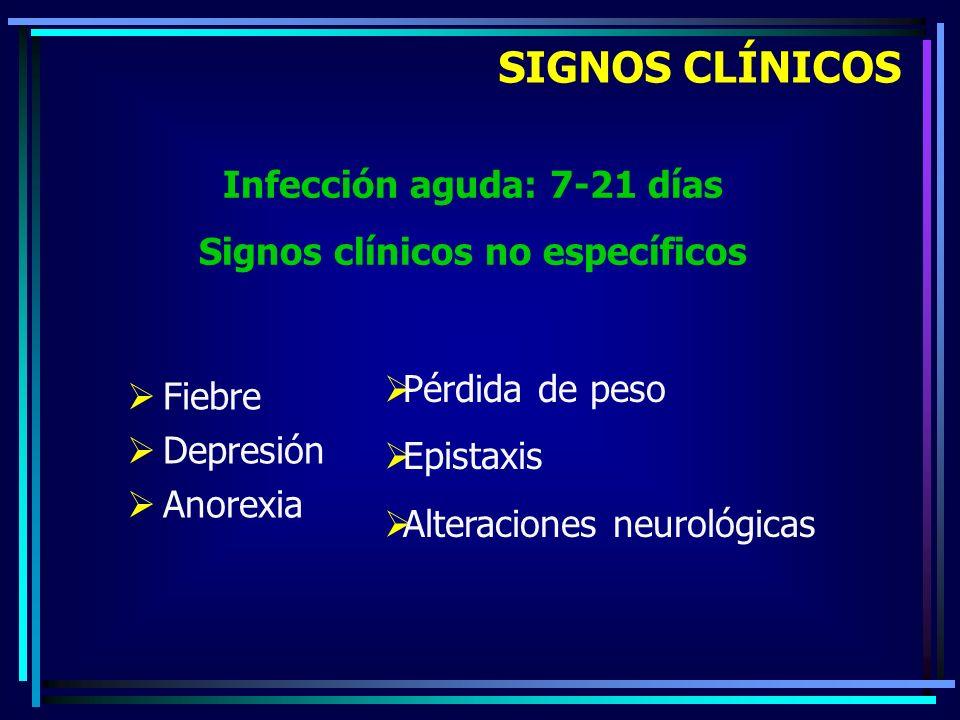 Fiebre Depresión Anorexia SIGNOS CLÍNICOS Infección aguda: 7-21 días Signos clínicos no específicos Pérdida de peso Epistaxis Alteraciones neurológica