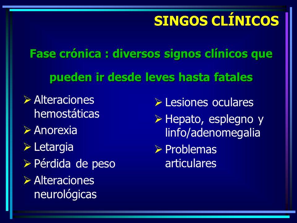 Alteraciones hemostáticas Anorexia Letargia Pérdida de peso Alteraciones neurológicas Lesiones oculares Hepato, esplegno y linfo/adenomegalia Problema