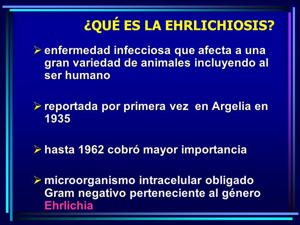 ¿QUÉ ES LA EHRLICHIOSIS? enfermedad infecciosa que afecta a una gran variedad de animales incluyendo al ser humano enfermedad infecciosa que afecta a