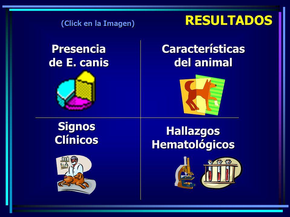 Presencia de E. canis Características del animal Signos Clínicos Hallazgos Hematológicos RESULTADOS (Click en la Imagen)