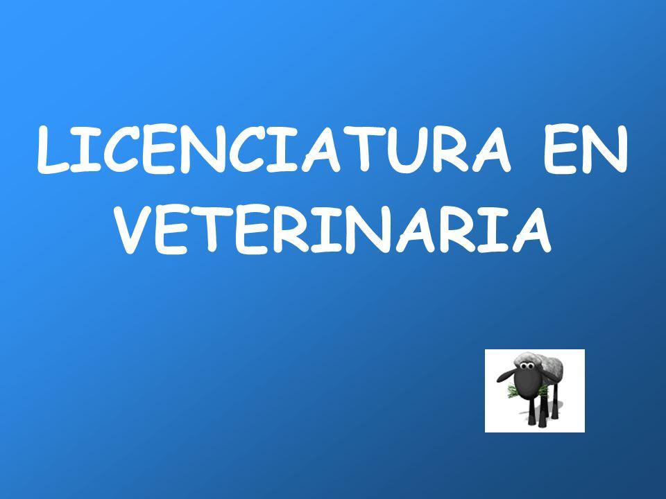 31 RASGOS CARACTERÍSTICOS DE LAS PERSONAS QUE EJERCEN LA VETERINARIA Entre los veterinarios colegiados en España, sigue siendo muy mayoritaria la presencia masculina (63,7% de hombres) frente a la femenina.