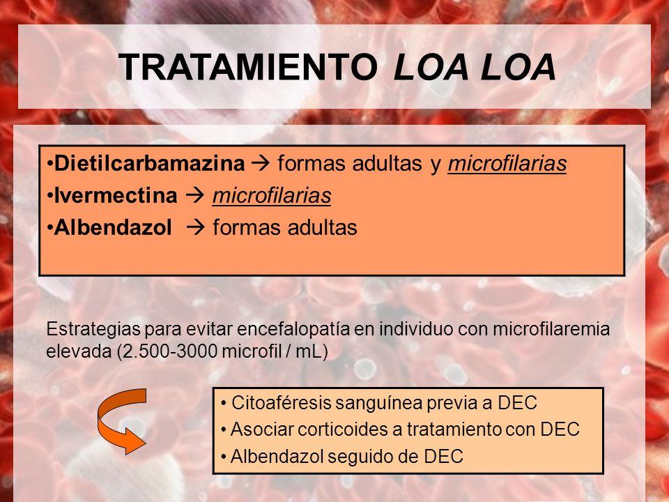 TRATAMIENTO LOA LOA Estrategias para evitar encefalopatía en individuo con microfilaremia elevada (2.500-3000 microfil / mL) Dietilcarbamazina formas