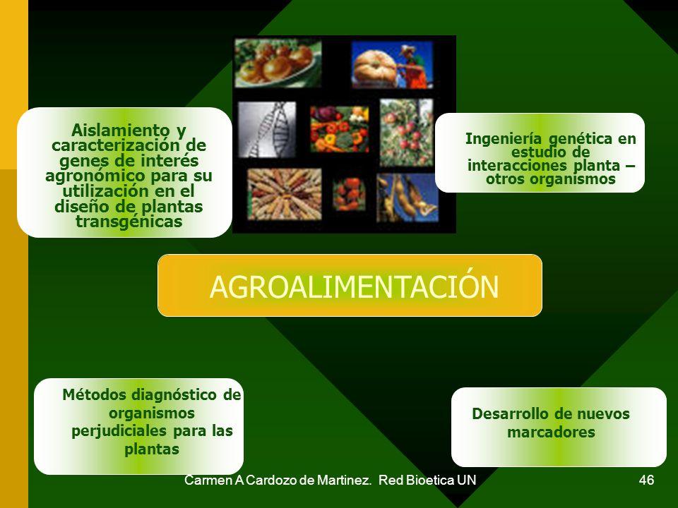 Carmen A Cardozo de Martinez. Red Bioetica UN 46 Aislamiento y caracterización de genes de interés agronómico para su utilización en el diseño de plan
