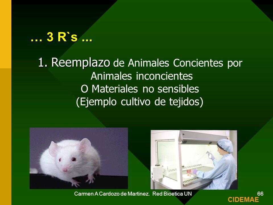 Carmen A Cardozo de Martinez. Red Bioetica UN 66 … 3 R`s... 1.Reemplazo 1.Reemplazo de Animales Concientes por Animales inconcientes O Materiales no s