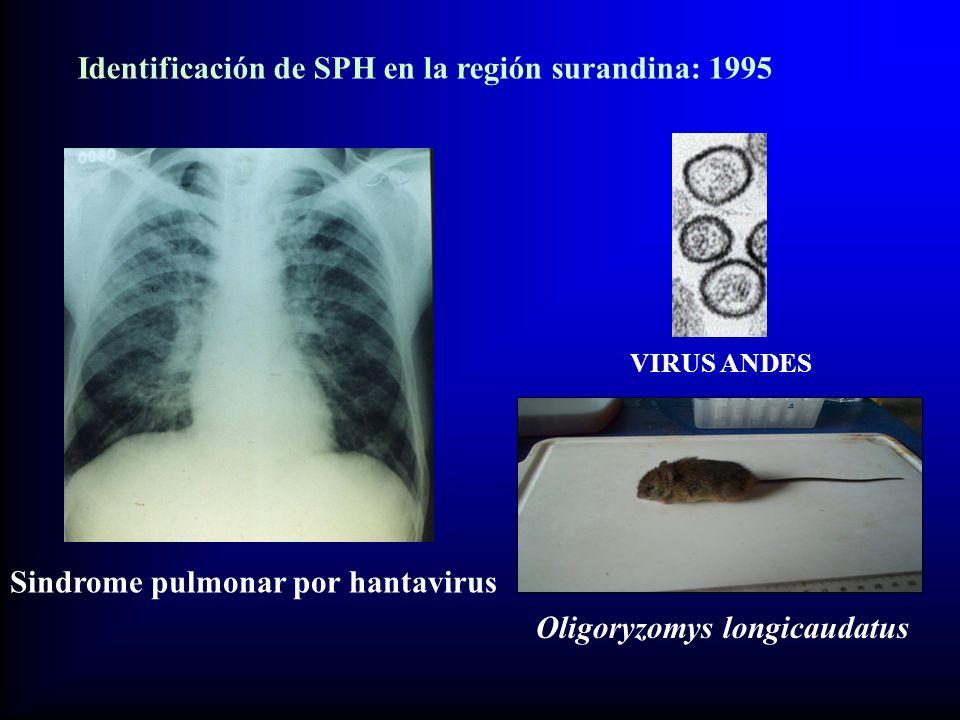 Sindrome pulmonar por hantavirus VIRUS ANDES Oligoryzomys longicaudatus Identificación de SPH en la región surandina: 1995