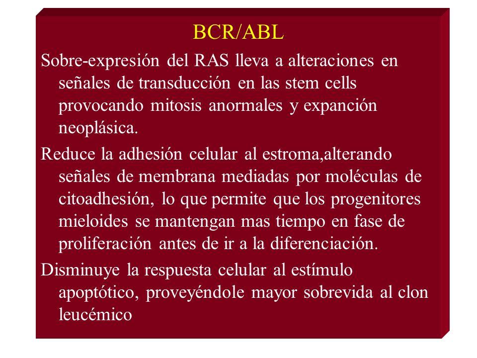 BCR/ABL Sobre-expresión del RAS lleva a alteraciones en señales de transducción en las stem cells provocando mitosis anormales y expanción neoplásica.
