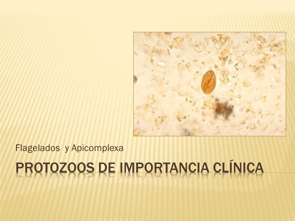 Flagelados y Apicomplexa