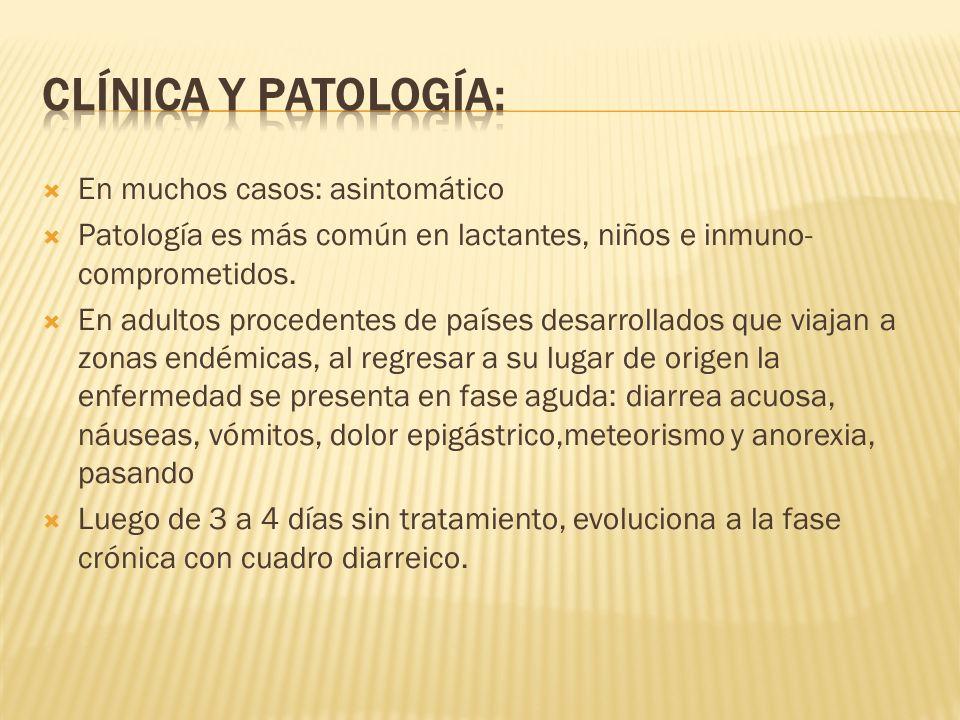 En muchos casos: asintomático Patología es más común en lactantes, niños e inmuno- comprometidos. En adultos procedentes de países desarrollados que v