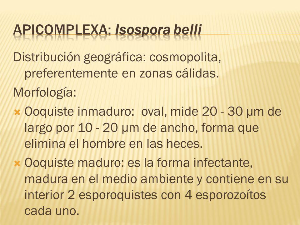 Distribución geográfica: cosmopolita, preferentemente en zonas cálidas. Morfología: Ooquiste inmaduro: oval, mide 20 - 30 µm de largo por 10 - 20 µm d