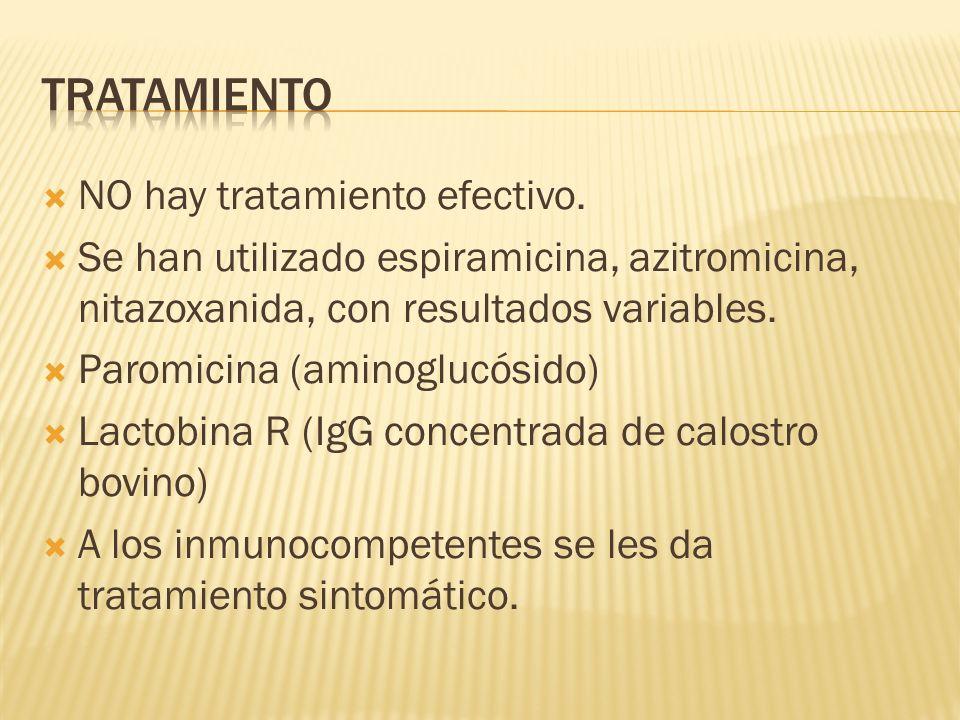 NO hay tratamiento efectivo. Se han utilizado espiramicina, azitromicina, nitazoxanida, con resultados variables. Paromicina (aminoglucósido) Lactobin