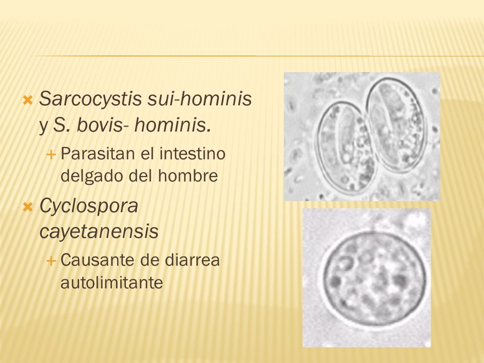 Sarcocystis sui-hominis y S. bovis- hominis. Parasitan el intestino delgado del hombre Cyclospora cayetanensis Causante de diarrea autolimitante