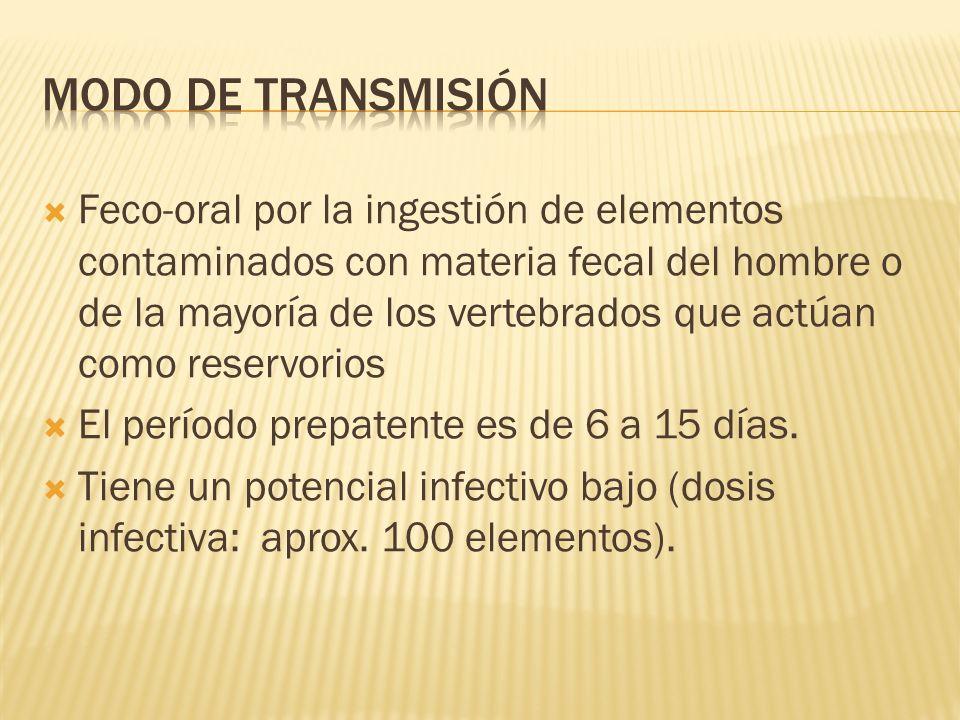 Feco-oral por la ingestión de elementos contaminados con materia fecal del hombre o de la mayoría de los vertebrados que actúan como reservorios El pe
