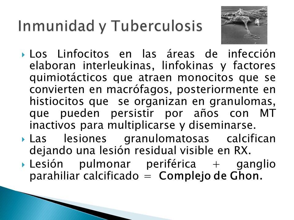 Los Linfocitos en las áreas de infección elaboran interleukinas, linfokinas y factores quimiotácticos que atraen monocitos que se convierten en macróf