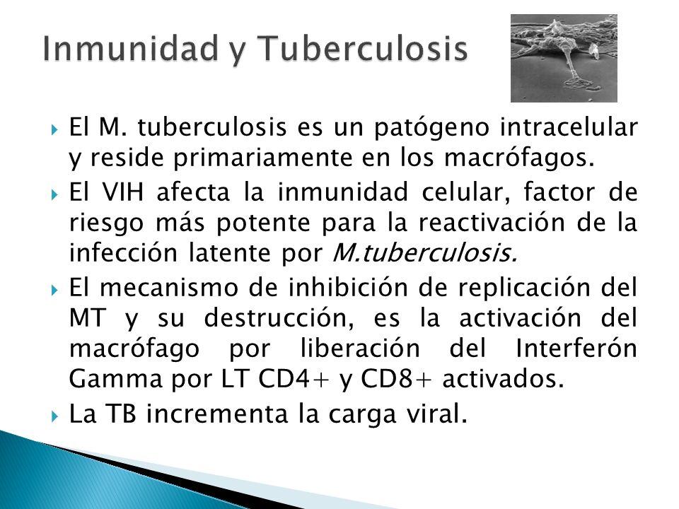 El M. tuberculosis es un patógeno intracelular y reside primariamente en los macrófagos. El VIH afecta la inmunidad celular, factor de riesgo más pote