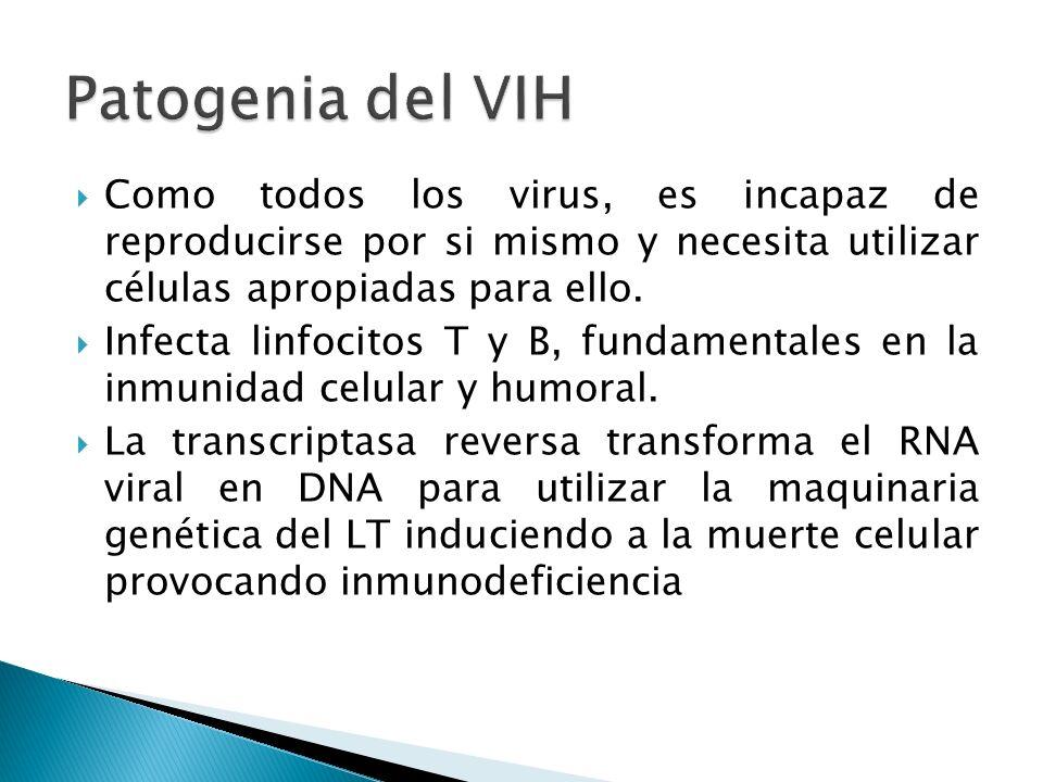 Como todos los virus, es incapaz de reproducirse por si mismo y necesita utilizar células apropiadas para ello. Infecta linfocitos T y B, fundamentale