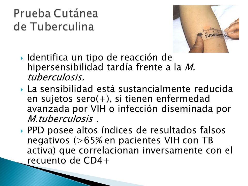 Identifica un tipo de reacción de hipersensibilidad tardía frente a la M. tuberculosis. La sensibilidad está sustancialmente reducida en sujetos sero(